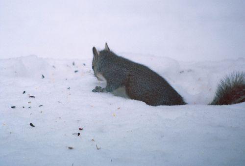 Squirrel 2-R1-047-22