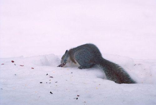 Squirrel 3-R1-049-23_1