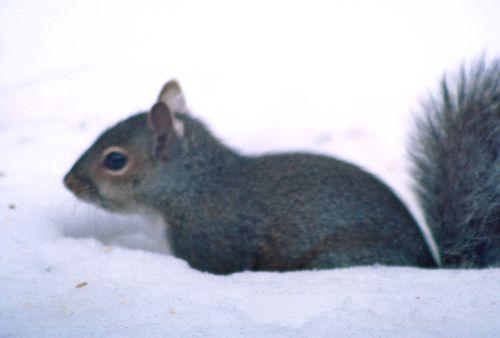 Squirrel 1R1-045-21_1