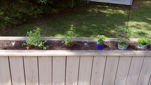 5 tips to improve fresh herb garden intro