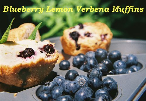 Blueberry lemon verbena muffins 4
