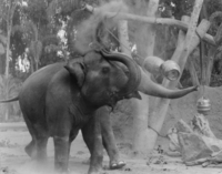 Elephants bw