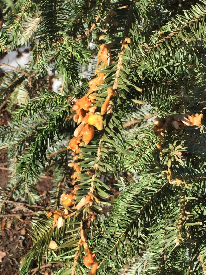 Christmas tree for birds